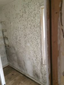 Mold Remediation - Recoveron - 1-800-884-0588